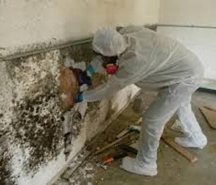 Mold Remediation Mold and Water Damage